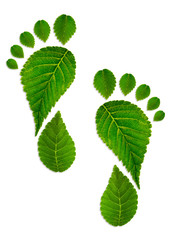 Trace foot from leaves