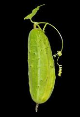 Cucumber 10