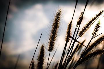 Flower grass background