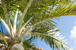 canvas print picture - palm tree over blue sky with white clouds