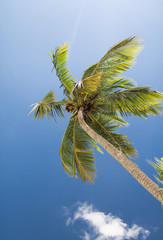 palm tree over blue sky with white clouds