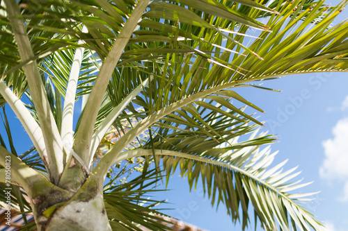 canvas print picture palm tree over blue sky with white clouds