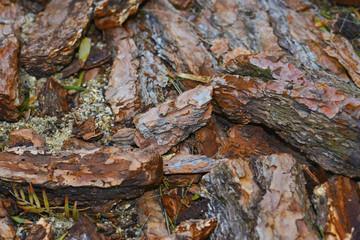 pine pieces