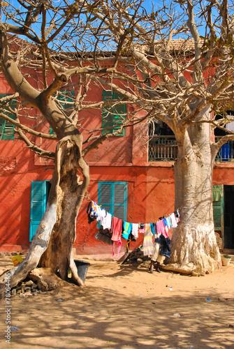 Papiers peints Baobab Ile de Gorée