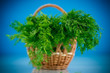fragrant fresh dill in a basket