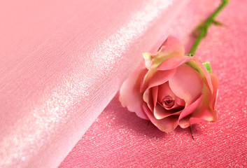 One pink rose on pink background for valentines day