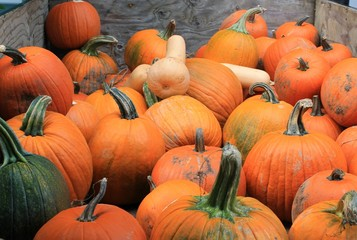Pumpkins for sale at a Pacific Northwest farmers market