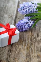 Blue hyacinth and greeting card