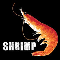 shrimp, vector illustration