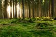Leinwanddruck Bild - Lichtblick im Wald