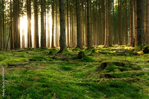 Lichtblick im Wald - 78065647