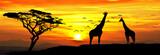 jirafas en el monte de africa