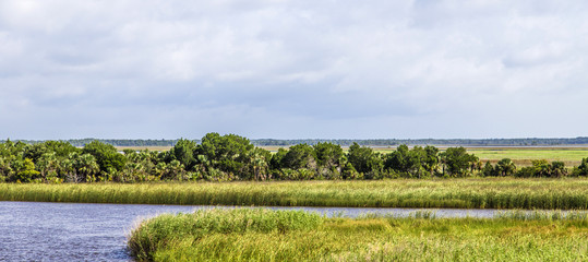 swamp land at Apalachicola with reed grass