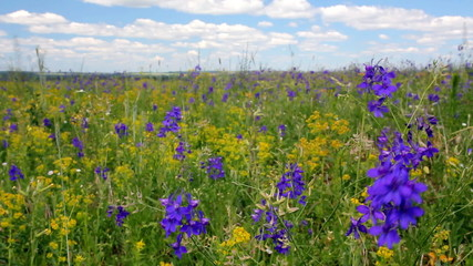 Meadow flowers under blue sky