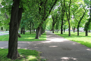 Beautiful park with many green trees