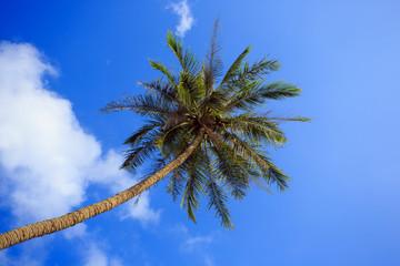 Пальма на фоне синего неба. Тропики