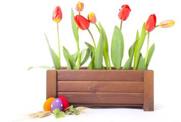 tulipani pasqua