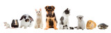 set pets - 78072064