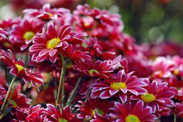Букет хризантем. Открытка