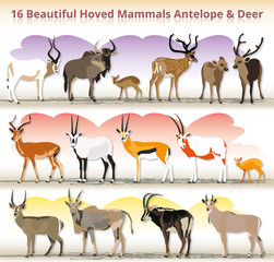 antelope & deer collection illustration