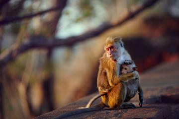 Adult cuddling baby monkey