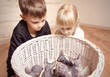 Kids Looking at the Sphynx Basket in a Basket