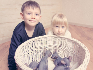 Kids Smiling at Camera Behind Sphynx Kittens