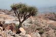 Desert near Dallol in Ethiopia - 78076251