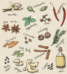 set of spices and herbs vector illustration