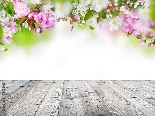 Plexiglas Kersen Spring blossoms background