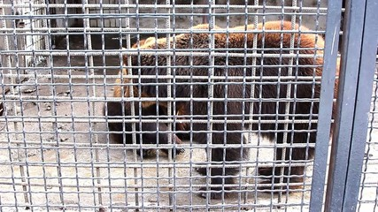 Bears in the Zoo