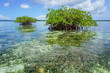Islets of mangrove in shallow water Caribbean sea