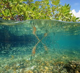 Mangrove ecosystem over and under the sea poster