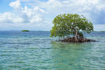 Mangrove tree in water with island at the horizon