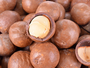Ripe macadamia nuts closeup