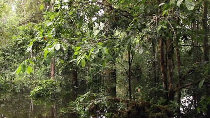 Drifting through an Amazonian oxbow lake