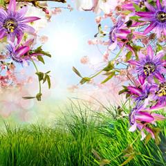 Frohe Ostern: Hintergrund mit Kirschblüten und Passionsblumen :)