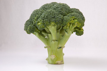 Whole broccoli plant