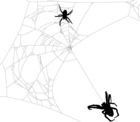 two spiders in old black web