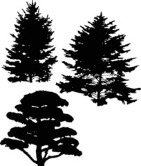 three pine and fir tree silhouettes isolated on white