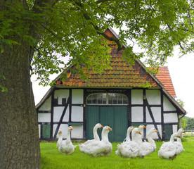 Bauernhaus mit Gänsen