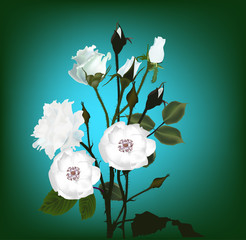bunch of white rose and brier flowers