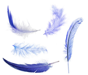 five blue feathers isolated on white