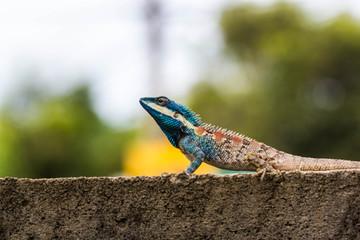 Cute Blue Lizard