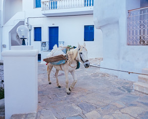 White horse with luggage walking on the street