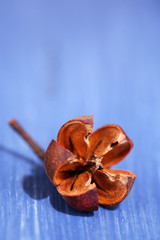 Dried decorative flower on color wooden table background