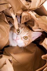 Katze spielt in Papier