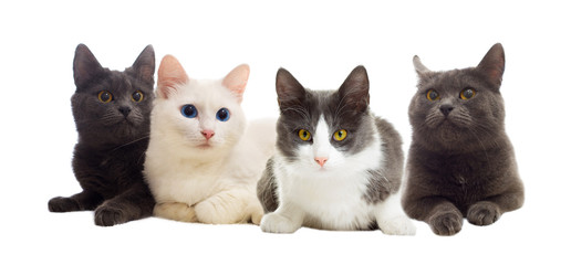 cats looking