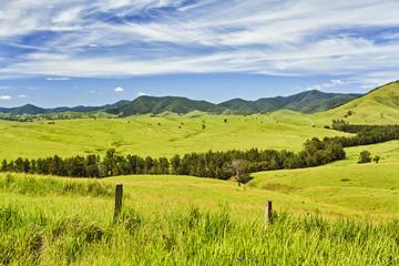 BTops Cobark Fields Grass