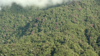 Rainforest covered cliffs with purple flower tree
